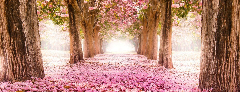 cropped-wallpaper-spring.jpg