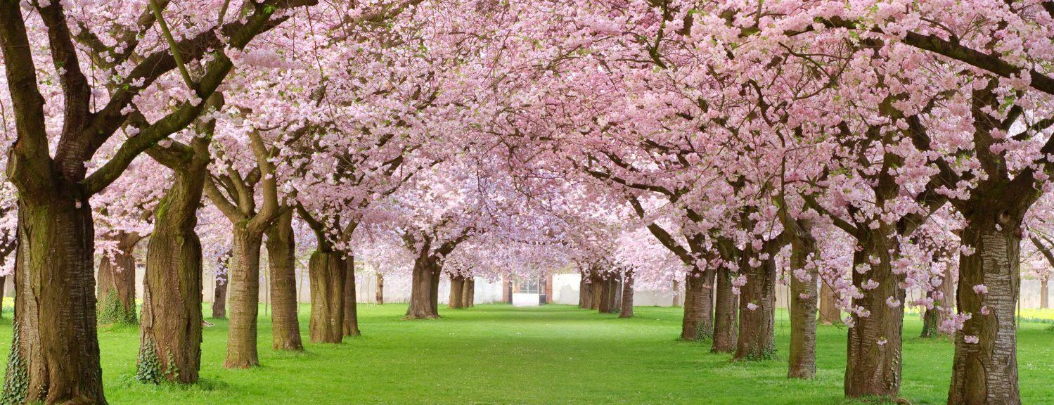 cropped-blossom-18.jpg